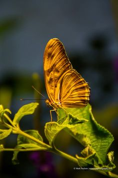 ~~Golden Butterfly, Washington, DC by Mark Paulson Photography~~