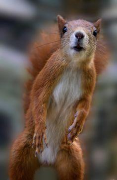 "♥ Hello""""' buddy can u spare a nut?"