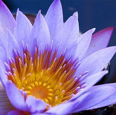 Louie Schwartzberg: Gratitude (site)
