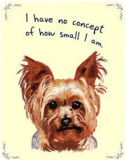 My puppy's philosophy in a nutshell.