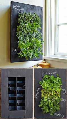 "WANT IT :: Chalkboard Wall Planter :: $129.95 | williams-sonoma.com :: [16"" x 5"" x 24"" h; 11 lbs.] USA made pine frame w/ 10 planting cells, irrigator holds 1 qt water w/ moisture mat technology to distribute water among cells, collector tray to allow for easy disposal of excess water, mounting bracket included :: This thing is AWESOME! I want it! 