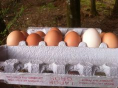 Chicken Economics: The Cost of Keeping Chickens | Modern Homesteading | Stylish Self-Sufficient Living | Homesteading | City to Country | City and Country Life | Homesteading Blog | Moving to the Country Blog | How to Homestead