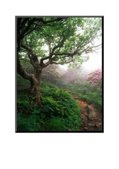 Art.com Multi Craggy Gardens Pisgah National Forest North Carolina USA by Adam Jones Mounted Photo
