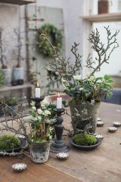 Winter plants and decoration - Winter & Christmas Trents Christmas Flowers, Natural Christmas, Winter Christmas, Christmas Crafts, Christmas Decorations, Christmas Candles, Simple Christmas, Christmas Thoughts, Country Christmas