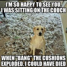 Funny animal quotes - Of The Happiest Dog Memes That Will Keep You Laughing For Hours dogmemes Cute Animal Memes, Funny Animal Quotes, Animal Jokes, Cute Funny Animals, Cute Baby Animals, Funny Quotes, Animal Captions, Life Quotes, Cute Animal Quotes