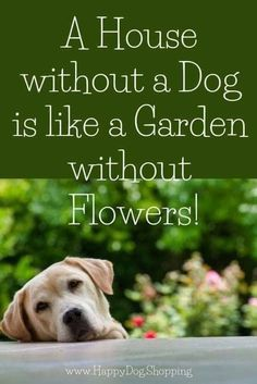 Puppy Quotes, Dog Quotes Love, Dog Quotes Funny, Animal Quotes, Funny Dogs, Dog Quotes Inspirational, Dog Sayings, I Love Dogs, Cute Dogs