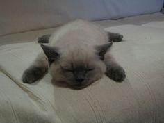 Sleppy Kitty!