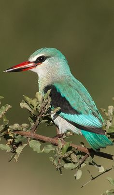 Kingfisher great colors - red , teal , bit of black, white and gray