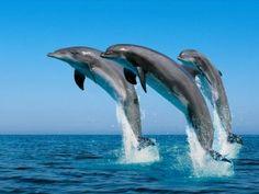 Delfines y ballenas en Gran Canaria - http://gd.is/xUDWmE