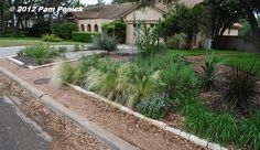 Crispy lawn along the curb is gone, replaced with gravel parking strip and drought-tolerant, deer-resistant garden.