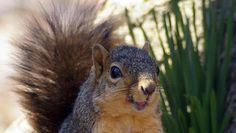 #Squirrels4good! Craigslist founder uses social media to raise money for wildlife
