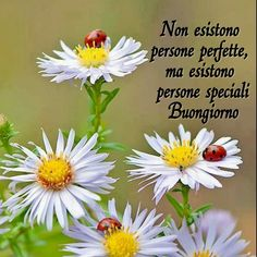 Non esistono persone perfette, ma speciali. Italian Memes, Good Morning, Persona, In This Moment, Genere, Dolce, Snoopy, Thoughts, Humor