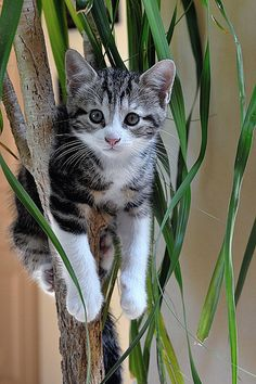 Up a tree.... and this is why i dont have house plants like this... My cats think they are meant to sleep in.