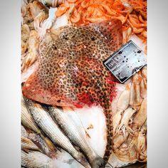 Tonight at Eataly Leopard and the Race #tonight #eataly #smeraldo #day #top #animalier #leopard #love #photo #i_love_photo #chic #city #milan #food #fish #filter #fish_market #tumblr #instagram #foursquare #pinterest #twitter #facebook #like #followers (presso Eataly Milano Smeraldo)