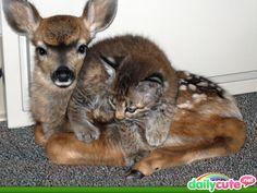 baby deer & kitten