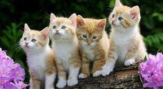 kucing — Rambler/images