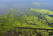 For more than two hours Wednesday, attorneys for the east bank levee authority and for oil and gas companies traded familiar arguments in a New Orleans' federal courtroom, as a judge considered whether to dismiss the authority's controversial wetlands damage lawsuit against the energy firms. ...