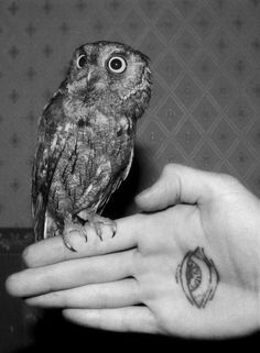 All seeing. #tattoo #eye #owl