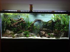 Aquarium Ideas - Complete Kits vs Individual Components - What is Better? Have You ever seen a nice looking 55 gallon? - Page 2 - The Planted Tank Forum Planted Aquarium, Nature Aquarium, Aquarium Landscape, Aquascaping, Coral Aquarium, Aquarium Fish Tank, 125 Gallon Aquarium, 125 Gallon Fish Tank, Biotope Aquarium