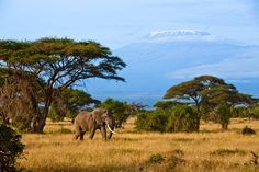 Elephant in Amboseli NP with Mt. Kilimanjaro in the back, Kenya, Travel Photographer | Dario Endara