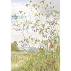 Margaret Tarrant - Woody Nightshade and Nipplewort