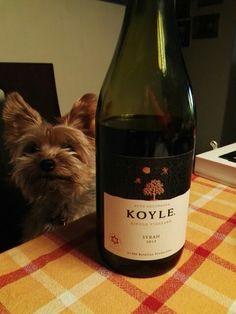 Koyle single vineyard Syrah 2013 Alto de Colchagua