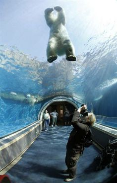 Tunnel in the Pittsburgh Zoo that goes underneath polar bears