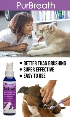 Our PurBreath No-Brush Pet Oral Care was formulated with natural ingredients to freshen breath, remove tartar and give your pet a healthier set of chompers. Dog Health Tips, Pet Health, Maltipoo, Yorkies, I Love Dogs, All Dogs, Dogs And Puppies, Bad Breath, Bulldogs Ingles