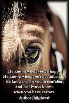 Is horseback riding ethical? See the perspective not from an outsider, but from a horse lover, herself. All The Pretty Horses, Beautiful Horses, Animals Beautiful, Horse Love, Horse Girl, Inspirational Horse Quotes, Horse Riding Quotes, Equestrian Quotes, Amor Animal