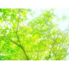 【angelsakura77】さんのInstagramの写真をピンしています。《#森林  #森林浴  #森  #林  #のどか  #静か  #のんびり  #空  #sky  #風  #風の森  #そよそよ  #ファインダー越しの私の世界  #写真好きな人と繋がりたい  #写真好き #写真  #写真撮ってる人と繋がりたい  #カメラ女子  #カメラ好きな人と繋がりたい  #カメラマン募集  #カメラマンさんと繋がりたい》