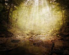 Renewed - PHOTO, forest photography, woodland decor, rustic, nature photography, enchanted forest, green wall art