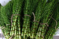 Horsetail herb is a powerful plant that prevents Alzheimer's and dementia by removing heavy metals from the body. Here is how to use horsetail herb. Herbs For Hair Growth, Quick Hair Growth, Natural Herbs, Natural Health, Au Natural, Edible Wild Plants, Alzheimer's And Dementia, Wild Edibles, Alzheimers
