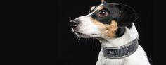 Check our Rocker Animalistic Silver Dog Collar at www.pjays.de