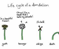 Frog Life Cycle For Kids Worksheet Pond Life on Pinterest...