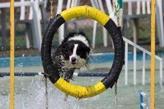 Ozzy participa en la disciplina de salto de obstáculos (AP).