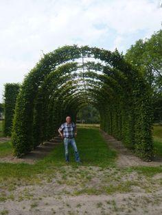 Gartenpflanzen in Bogenform bieten auch einen guten Sonnenschutz Garten, z. B. für Wege