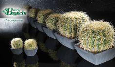 Ingrosso Fiori secchi, fiori e piante artificiali, decori natalizi e pasquali, cesteria e vetrinistica | Bianchi Dino Srl