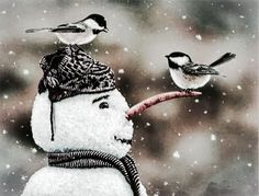 Snow Birds.....