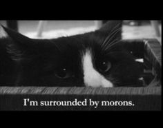I am in love with Henri Le Chat Noir!!! Lol