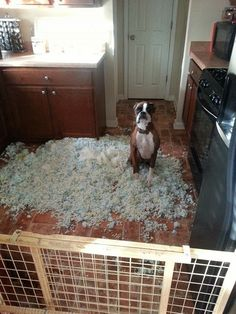 11 Dogs Who Have No Idea Where This Mess Came From