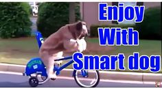 Funny Animals Compilation - Funny dog video | Funniest Animals Fails Vid...