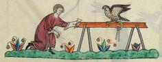 FRÉDÉRIC II , traité de fauconnerie , traduction française, faite à la demande de Jean, sieur de Dampierre et de Saint-Dizier, et de sa fille Isabelle.  Date d'édition :  1201-1300  Français 12400  Folio 169v