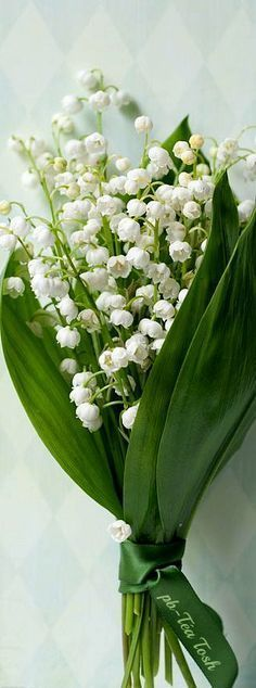 Lily of the Valley, the flower of my birth month. White Flowers, Beautiful Flowers, Valley Flowers, Language Of Flowers, Lily Of The Valley, Flower Bouquet Wedding, Floral Bouquets, Garden Styles, Flower Art