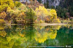 รูปสวยๆ จาก ทะเลสาบ ดอกไม้ห้าสี อุทยานจิ่วจ้ายโกว เขตปกครองตนเอง อาป้าโจว  มณฑลเสฉวน ประเทศจีน