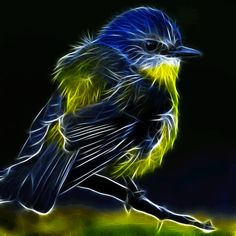 Glowing bird - animation by megaossa