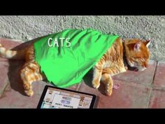 FUNNY CATS COMPILATION 2017 P3| Best Funny Cats Compilation 2017 make you LAUGH to DEATH | meow meow -  #animals #animal #pet #cat #cats #cute #pets #animales #tagsforlikes #catlover #funnycats  Learn how to speak cat! Click HERE for the cat bible! FUNNY CATS COMPILATION 2017 P3 | Best Funny Cats Compilation 2017 make you LAUGH to DEATH | meow meow Cats are simply the best pets, they make us... - #Cats