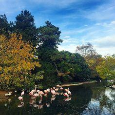 Les #oiseaux sont très #roses  #tetedorparc #lyon #onlylyon #tetedor #parc #park #ilovelyon #fall #france #autumnleaves #yellow #jaune #automne #travel #pink #rose