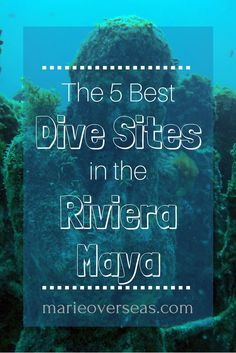 The 5 Best Dives Sites in the Riviera Maya   Marie Overseas