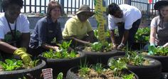 A rooftop garden will produce fresh vegetables for residents of Douglas Village