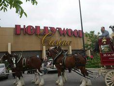 Hollywood  Casino beautiful  Budweiser, Clydesdale in Kansas, city, Kansas :-$